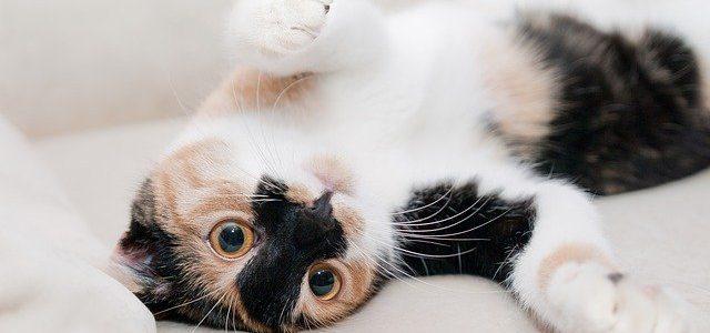 Mruczący kot